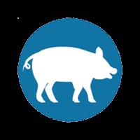 WEBINAIRES ALIMENTATION 100% bio Monogastriques 25 mars (Volailles) et 29 mars (Porcs)