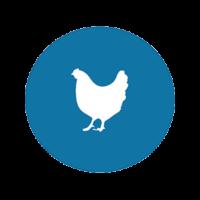 """Influenza Aviaire – Elevation en risque """"Elevé"""" Drôme"""